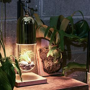 조명안에 작은 정원 램플랜트 캡슐 조명